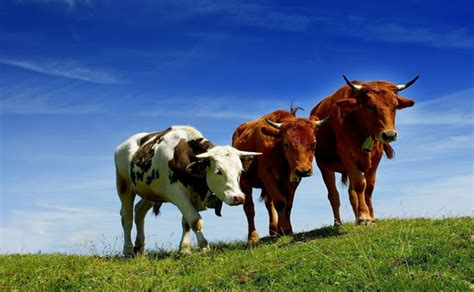 Domestic Animals Wallpaper - 50 and domestic animals wallpapers