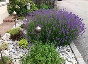 Lavendel Pflanzen Kaufen : lavendel oregano salbei thymian bohnenkraut mit silbernen ~ Lizthompson.info Haus und Dekorationen