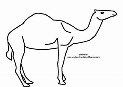 Gambar Mewarnai Unta Sketsa Hewan Binatang Berkaki