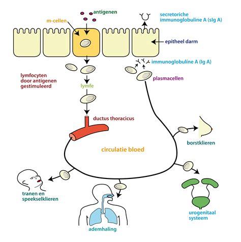 Probiotica candida infectie