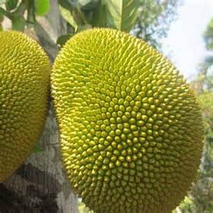 Pic of Fruit and Jackfruit Tree