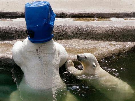Animals With Human Behavior 28 Pics