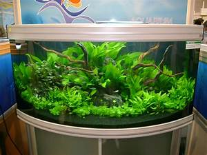 Aquarium Einrichten Beispiele : s wasser aquarien ~ Frokenaadalensverden.com Haus und Dekorationen