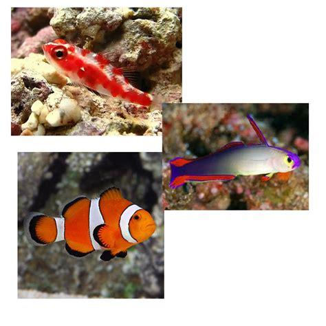 nano aquarium quel poisson 28 images microrasbora kubotail poissons exotiques vente magasin