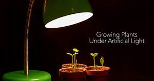 What You Need To Know For Growing Plants Indoors Under