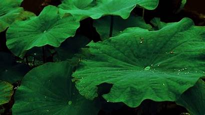 Plants Plant Water Gifs Nature Animated Giphy