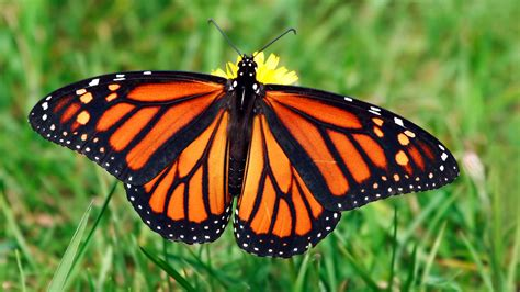 Image Of Butterfly Collection For Free Download