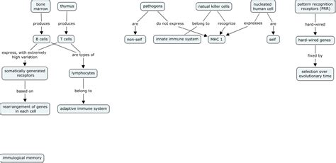 Immunity Concept Map.Images Of Immune System Concept Map Golfclub