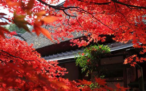 japan images   windows wallpapers hd