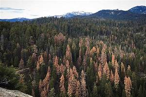 26 Million Trees Died in California Forests in Just One ...