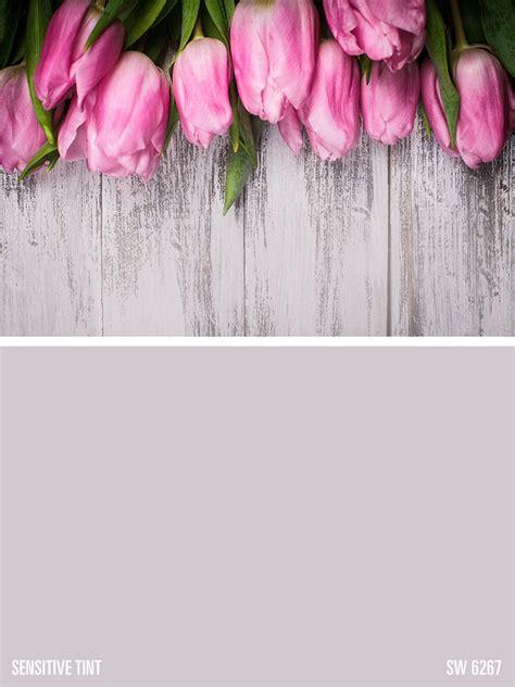 sherwin williams gray paint color sensitive tint sw