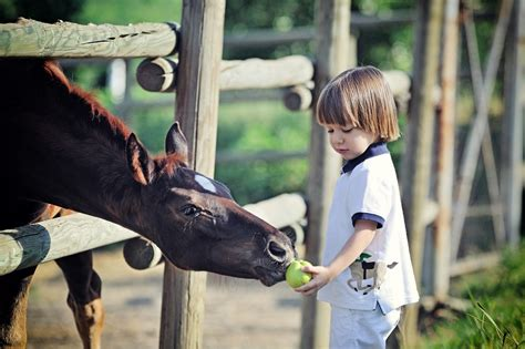 horse apple apples horses eat feeding kid treats healthy lovebackyard
