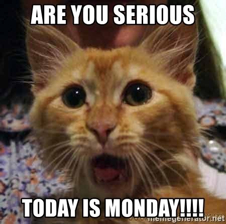 Are You Serious Meme - are you serious today is monday crazy cat meme generator