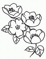 Blossom Cherry Coloring Tree Apple Flowers Pages Blossoms Drawing Branch Clipart Japanese Flower Fruit Branches Template Chinese Getdrawings Adults Popular sketch template