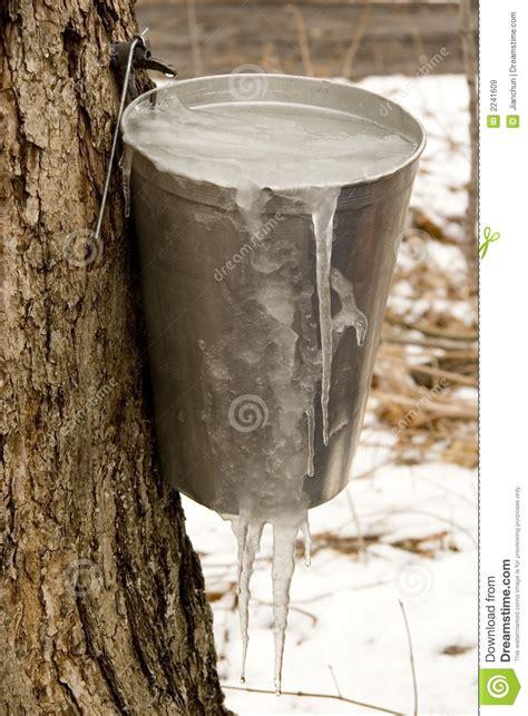 frozen maple syrup stock image image  harvest quebec