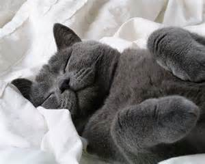 sleeping cat morning thursdayhere goes daily mail forum mail