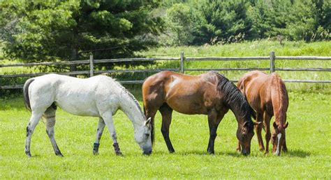 horses grazing web update horse stallion rider pasture sunrise