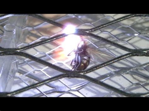 gory super slow motion video  fly  zapped   electric bug zapper tennis racket