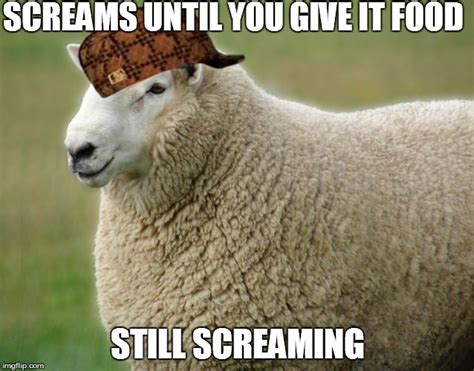 Sheep Memes - scumbag sheep imgflip