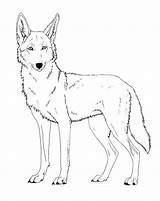 Coyote Coloring Lineart Drawing Cartoon Paint Friendly Printable Face Drawings Ferox Canis Version Head Wolf Template Deviantart Howling Line Sketches sketch template
