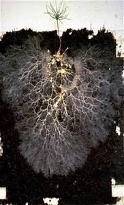 About Mycorrhizas
