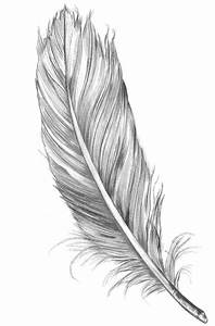 Feather tattoo | tattoo | Pinterest | Feather tattoo ...