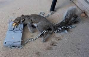Will Rat Traps Kill Squirrels