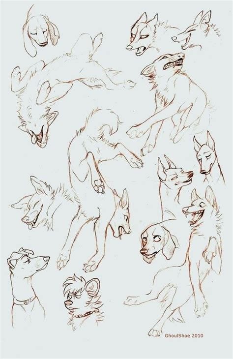 drawing canines   poses images