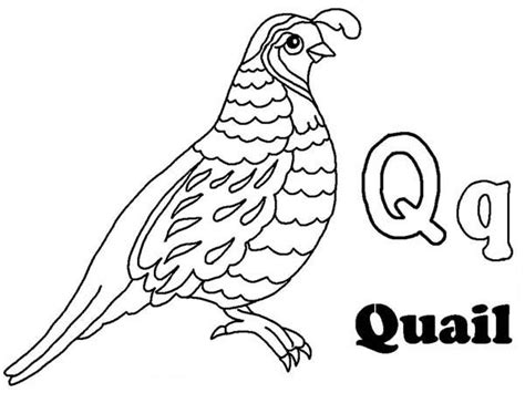 Letter Q Coloring Worksheet Coloring Pages