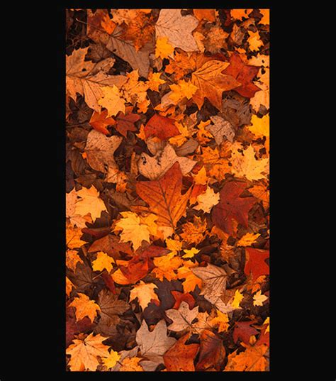 Fall Backgrounds For Iphone 11 by Fall Foliage Hd Wallpaper For Your Iphone 6