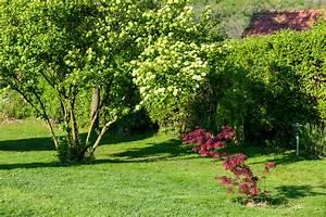 Lebensbaum Hecke Schneiden : thuja hecke schneiden wann thuja hecke schneiden wann und wie schneidet man thujen lebensbaum ~ Eleganceandgraceweddings.com Haus und Dekorationen
