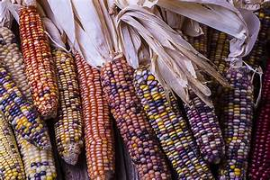 Colorful Indian Corn Photograph by Garry Gay