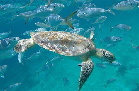 Glass Bottom Boat Tours Barbados by The 15 Best Things To Do In Barbados 2018 With Photos