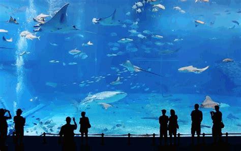 Animated Aquarium Wallpaper Gif - animated fish tank gif