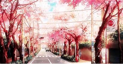 Anime Kimi Blossom Cherry Scenery Aminoapps Enregistree