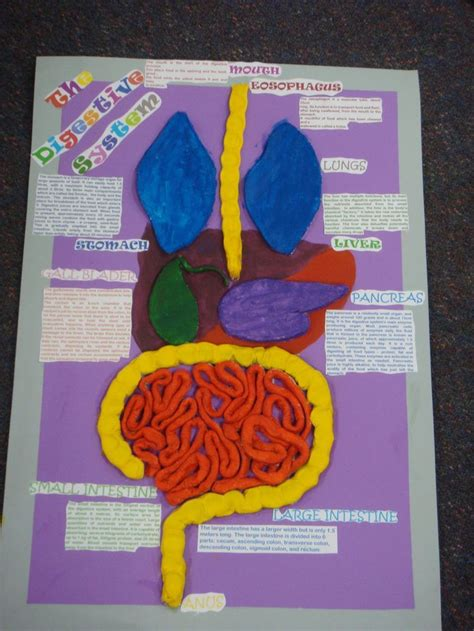 school  art project digestive system digestive system