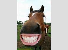 42 besten Pferde Bilder auf Pinterest Lustige bilder