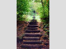 Steps in the Woods On the way up to Otley Chevin from