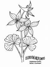Coloring Delphinium Larkspur Flower Pages Drawing Flowers Printable Google Draw Illustration Poppy Drawings Doodle Adults Sketches Many 783px 57kb sketch template