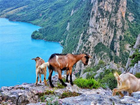 Liqeni i Bovillës në Shqipëri, bukuri që duhet vizituar ...