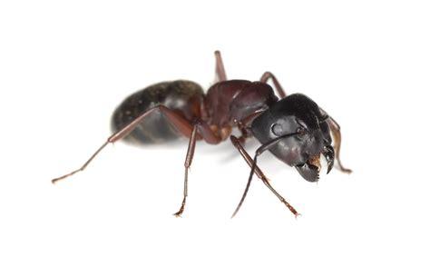 ant exterminator  mattituk ny    important
