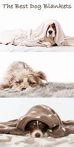 Best dog blankets reviews and tips for making the right for Best dog blankets
