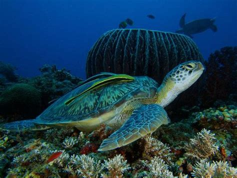 Lombok Dive Resort Diving In Indonesia Dive Indonesia Dive Your Choice
