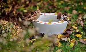 Vogeltränke Selber Machen : vogeltr nke aus beton ~ Yasmunasinghe.com Haus und Dekorationen