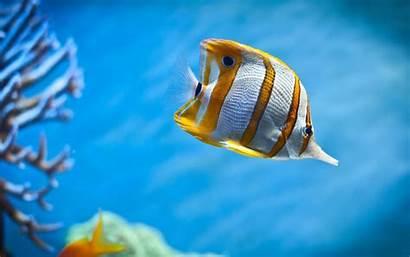 Fish Ocean Sea Under Water Wallpapers Pixelstalk