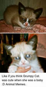 25+ Best Memes About Cute and Grumpy Cat | Cute and Grumpy ...