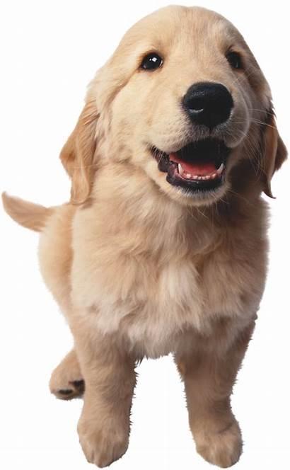 Dog Pngimg
