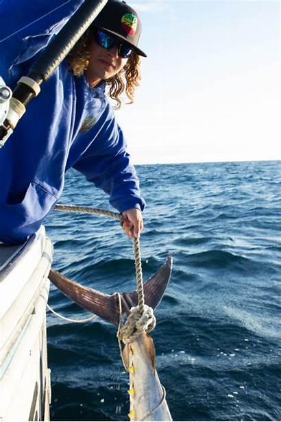 Tuna Wicked Geographic National