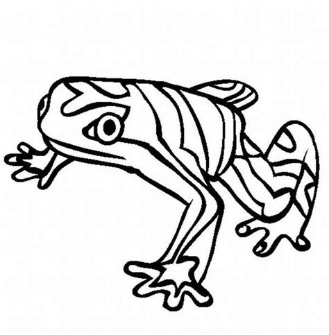 Rainforest Animals Coloring Pages by Rainforest Animals Coloring Pages Printable Rainforest