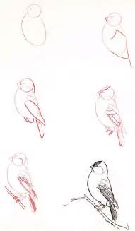 Learn How to Draw Birds